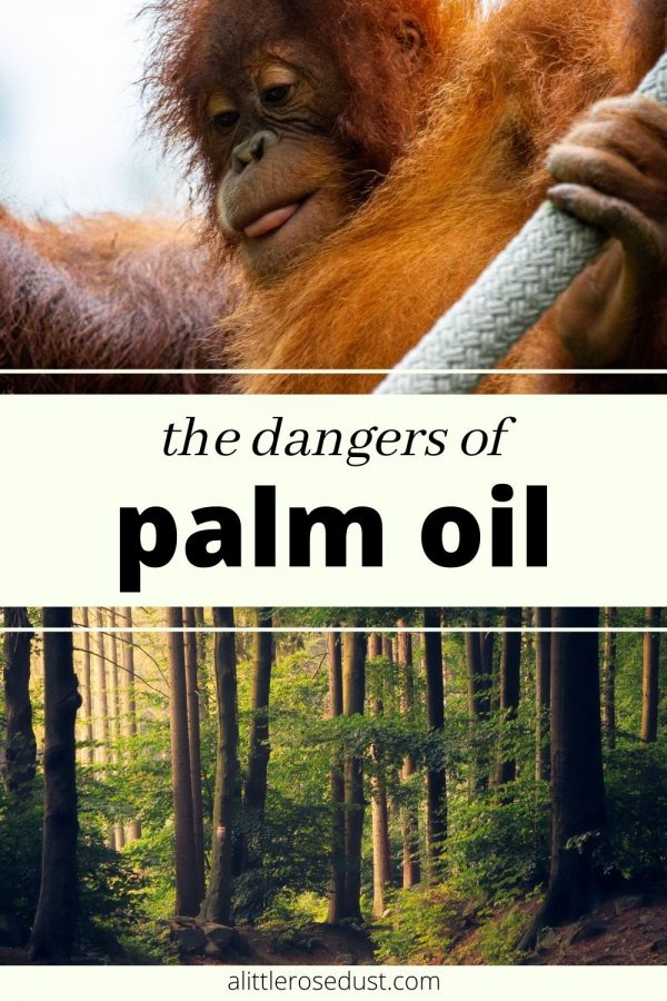 the dangers of palm oil